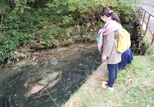 遡上する鮭のいる川